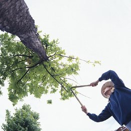 tree trimming and tree pruning in Langley