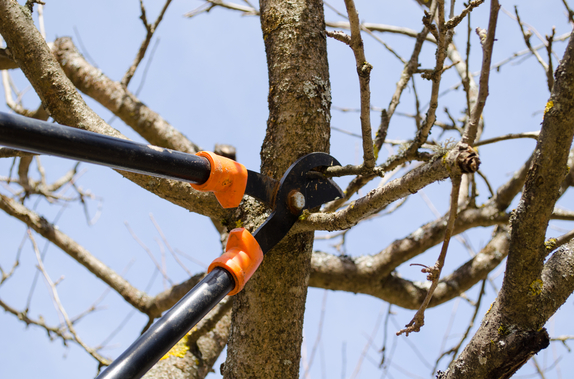 Langley tree trimming and hedge trimming service.