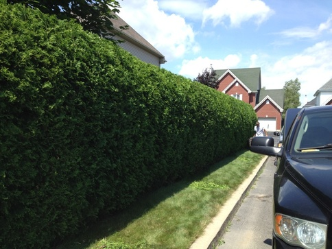 Commercial property hedge trimming in Langley