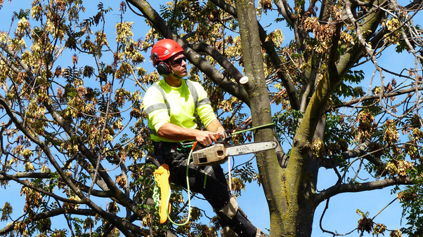 Tree trimming and removal in Langley