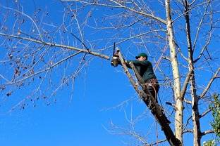 Complete tree removal by Langley Tree Service and Arborist